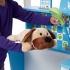 מרכז פעילות לטיפול בחיות  דו צדדי מליסה ודאג